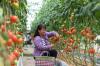Съвременни технологии избавят земеделците и скотовъдцте от Синдзян от бедността